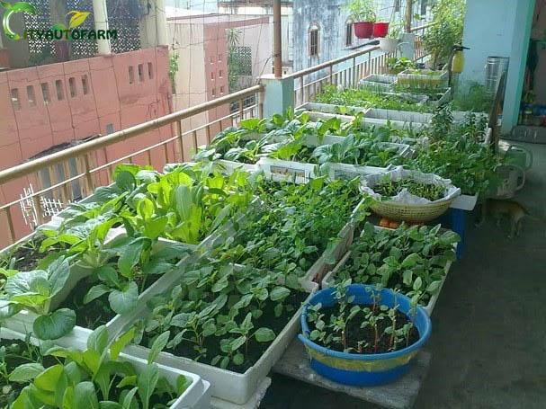 Đất vi sinh trồng rau