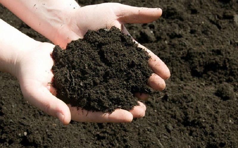 4 ưu điểm nổi bật của phân hữu cơ khi trồng rau sạch tại nhà