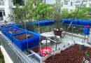 Lợi ích tuyệt vời của việc trồng rau sạch tại nhà?