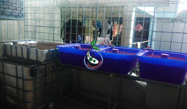 Mô hình Aquaponics CB+3[Hoàng Mai Hà Nội]