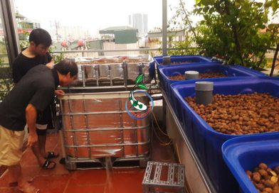 Lắp đặt mô hình trồng rau nuôi cá CB+4[Lê Thanh Nghị-Hà Nội]