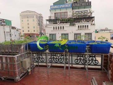 Mô hình Aquaponics| Trồng rau nuôi cá trên sân thượng