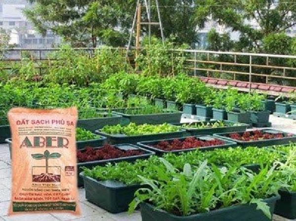 Đất phù sa Aber thích hợp với nhiều loại cây trồng