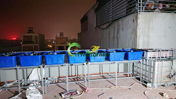 Hệ thống gồm 7 chậu trồng rau và một bể nuôi cá