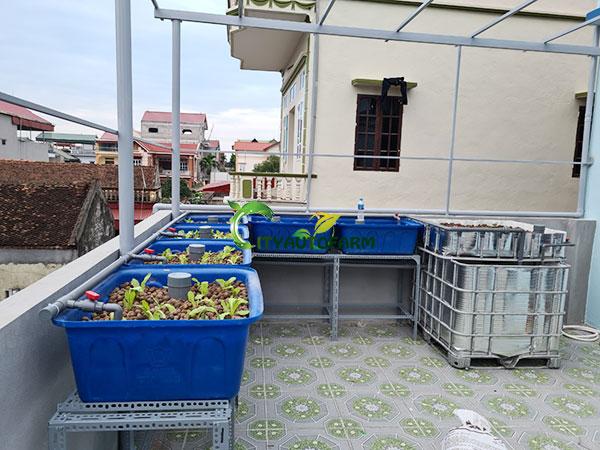 Hệ bao gồm 6 chậu sỏi trồng rau và 1 bể nuôi cá