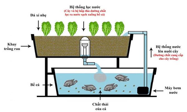 Cấu tạo và nguyên lý hoạt động của hệ thống Aquaponics