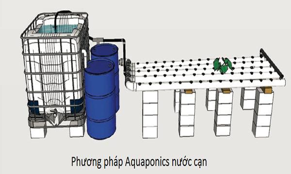 Hệ thống Aquaponics nước cạn
