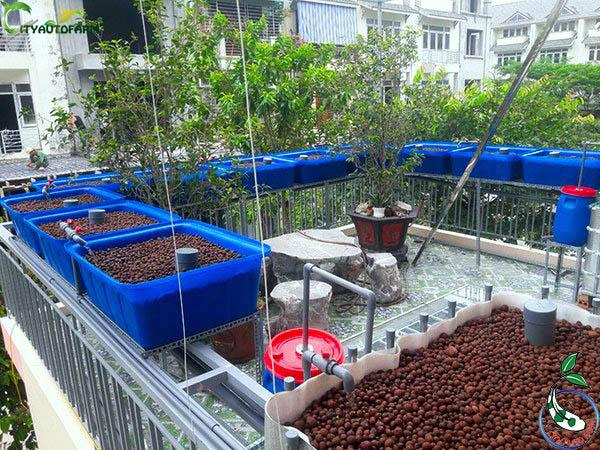 Cận cảnh đất sét nung sử dụng trong hệ thống trồng rau kết hợp nuôi cá