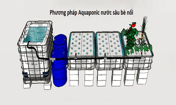 Hệ thống trồng rau thủy canh kết hợp nuôi cá nước sâu bè nổi