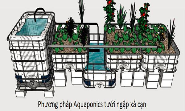 Mô hình Aquaponics tưới ngập xả cạn
